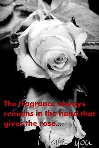 Fragrance Of Rose