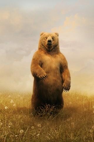 Bear Paint