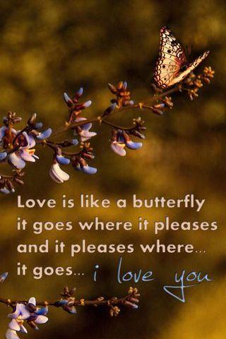 나비처럼 사랑해.