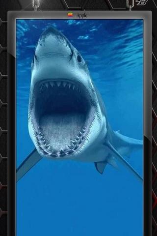 शार्क 1