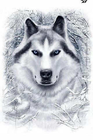 Husky I