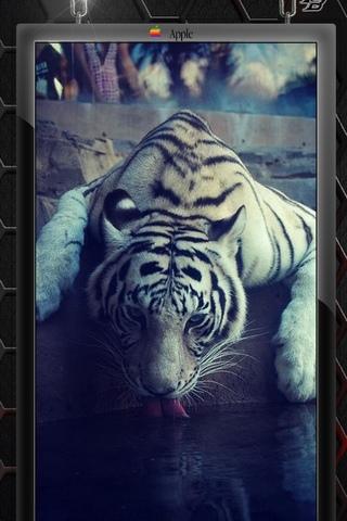 เสือโคร่ง 3