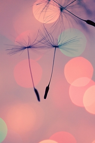 Wallpapers-For-iPhone-5-Girly-188