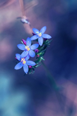 Small-fresh-blue-flowers