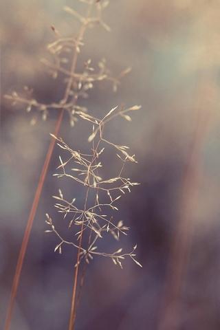 Nature 020