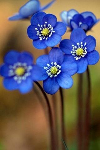 Blue-Flowers-i