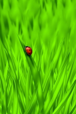 Lady Bug (IPhone / iPod 5)