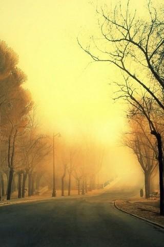 Tree Roads