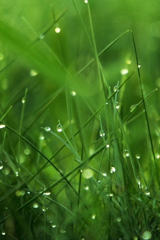 Dew-on-Grass