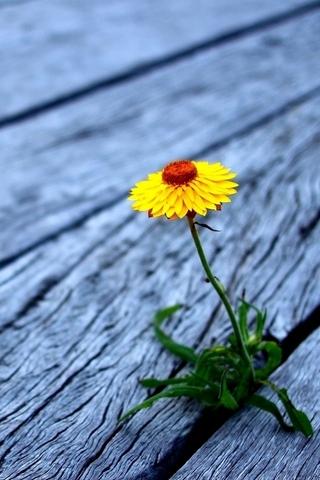 Flower Between Wooden Boards