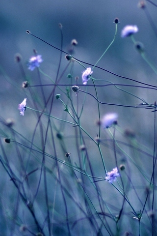 Flowers Stems