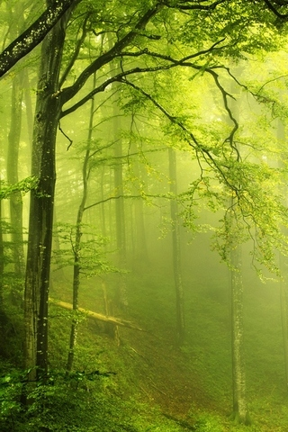 Beautiful-green-forest