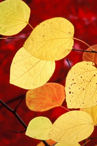 Beautiful Yellow Leaves
