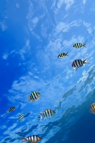 Underwater Tropical Fish