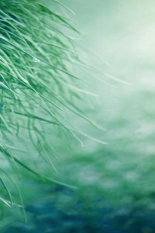 Pure-Grass