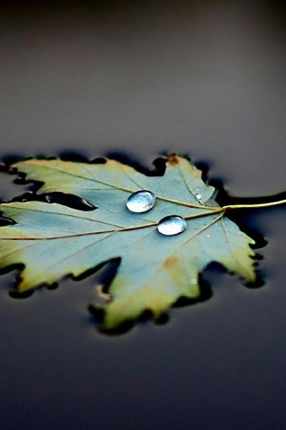 Water-Leaf-Drops-