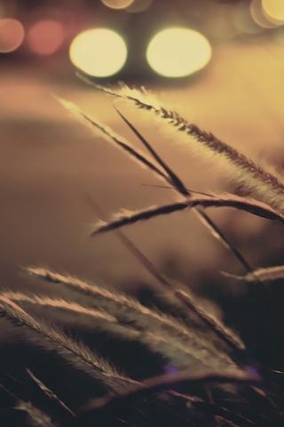 Nature 022