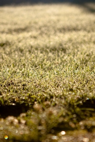 Depth Of Field Grass