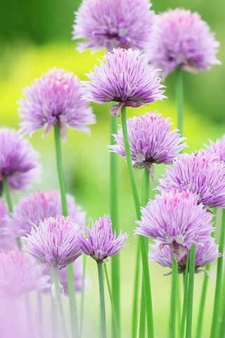 Fresh And Elegant Flowers (Purple)