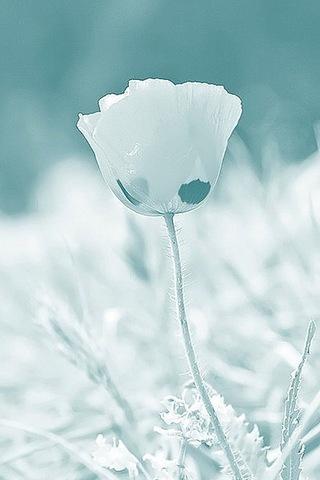 زهور الضباب - IPhone5