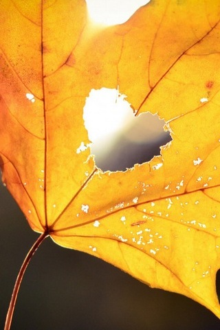 Golden Autumn Leaves (Love)
