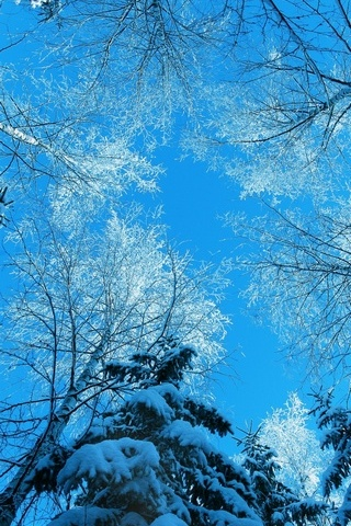 Tree-Tops-And-Blue-Sky