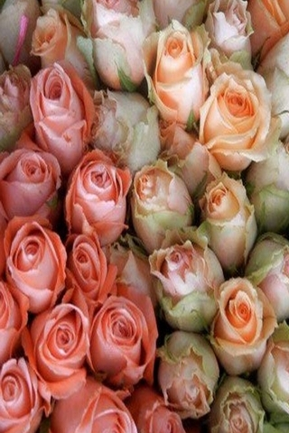 Little Flowers Roses