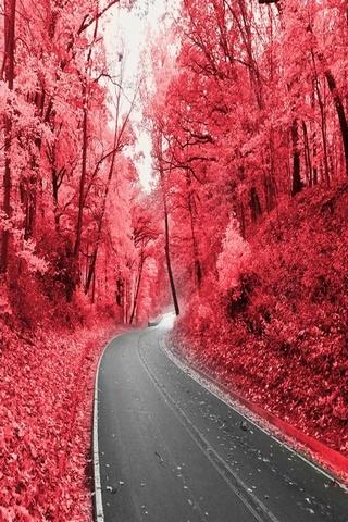 Pink Highway