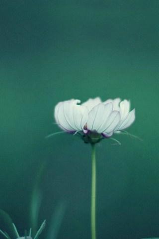 फुलांचा
