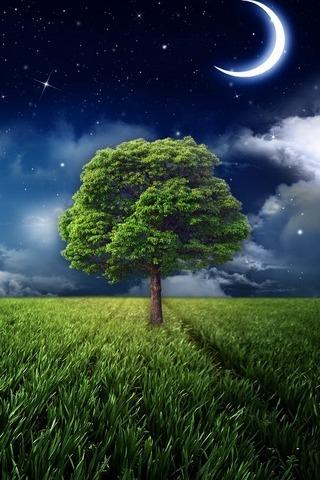 เที่ยงคืนต้นไม้