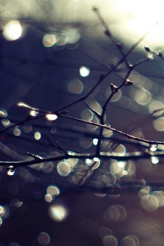 Wet-Twigs