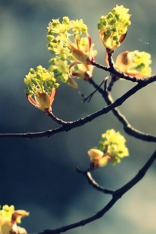 꽃 - 나뭇 가지 2