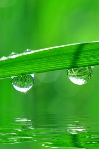 Green-Dew