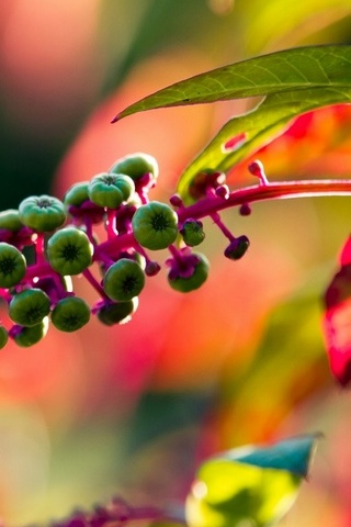 Green-Seeds
