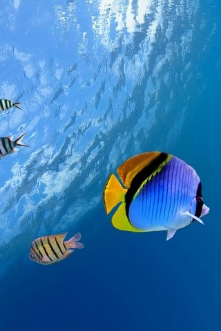 Sous-marin-Tropical-Fish