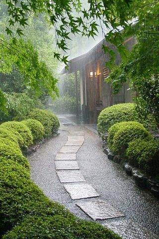Dicht-Regen-Trails