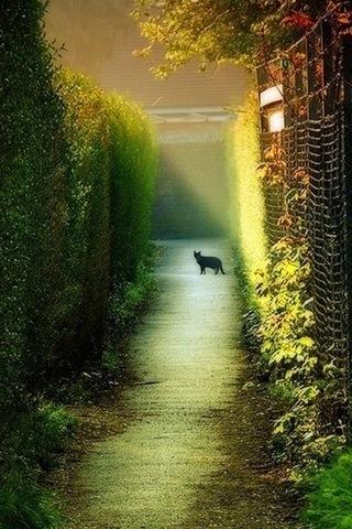 Dawn-cats