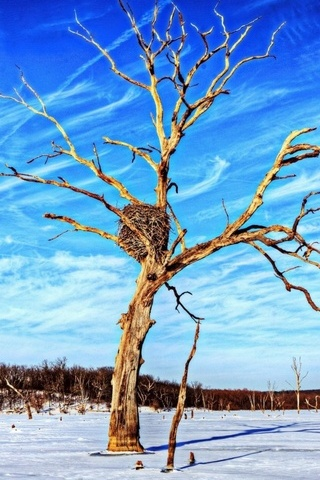 Natural Tree Winter