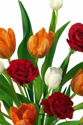 Bankett von Tulpen