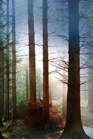 Fog Amongst Trees