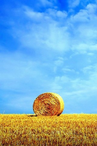 Wheat World
