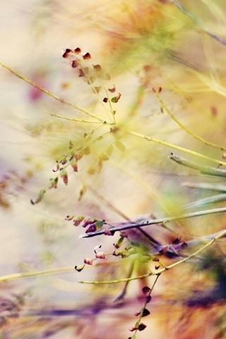 Branches-Macro