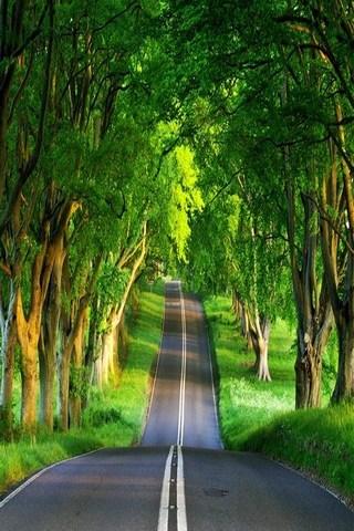 Зелений шлях