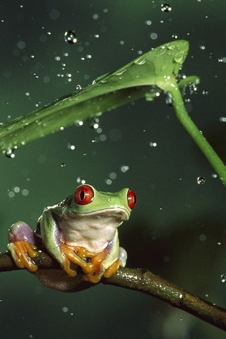 Frog In The Rain - IPhone5