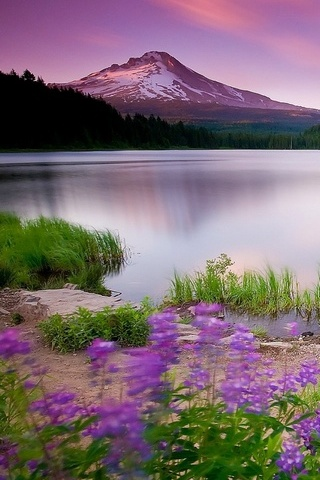Mountain-Lake-And-Flowers