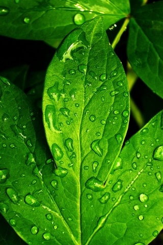 Leaves-and-Dew