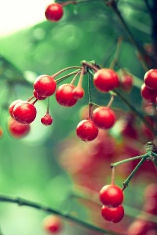 Kırmızı Karpuzu
