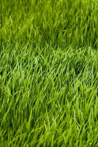 çimen