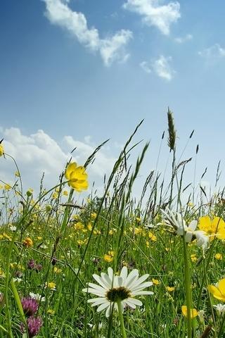 Summer Nature