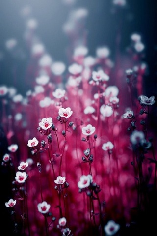 Những bông hoa mùa xuân